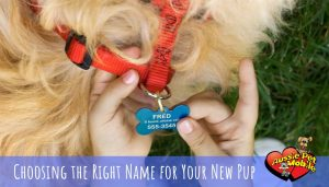 Choosing the Right Name for Your New Pup
